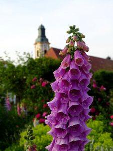 zwei Türme - der vom Stift und von einer Glockenblume