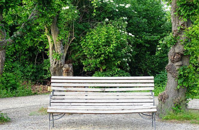 Eine alte verwitterte Holzbank, im Hintergrund alte knorrige Bäume und Holler