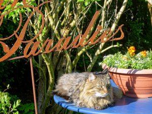 """Mein Tigerkater Caruso liegt auf einem blauen Dekotisch im Garten. Daneben steht ein großer Topf mit Blumen. Darüber ein Dekostecker mit rostiger Schrift """"Mein Paradies"""""""