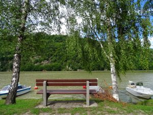 Eine Bank an der Donau zwischen zwei Birken und Booten an der Donau - bei Aschach