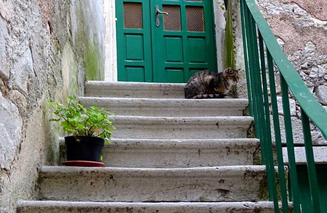 Eine Stiege mit einem Blumenstock. Oben vor der grünen Haustüre sitzt eine Katze auf der Stufe