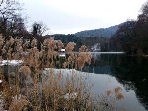 Der Blick auf das Schilf über den See in den grauen Tönen des Winters.