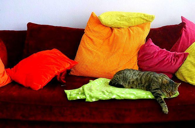 Mein rotes Samtsofa mit bunten Kissen und meinem Tigerkater auf der Decke
