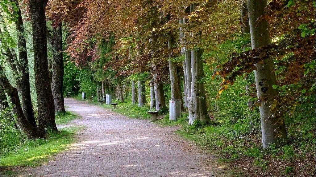 Ein Stück des Spazierweges am Karlsbader Weiher mit Bänken im gleichmäßigem Abstand