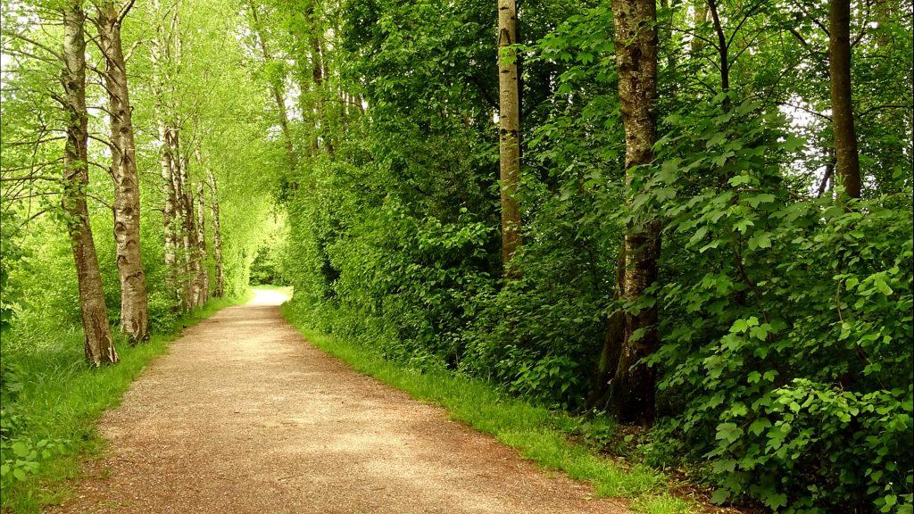 Der Weg durch die Birkenallee zum Erlebnisweg