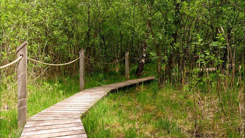 Weg durch das Moor auf den Lärchenholzplanken