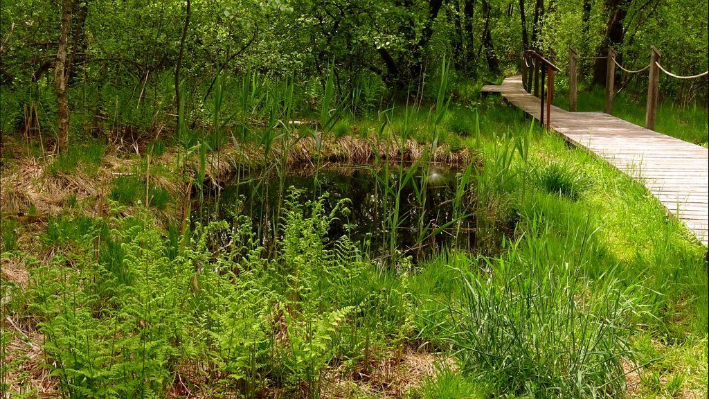 Kleiner Tümpel am Wegesrand im Moorwald