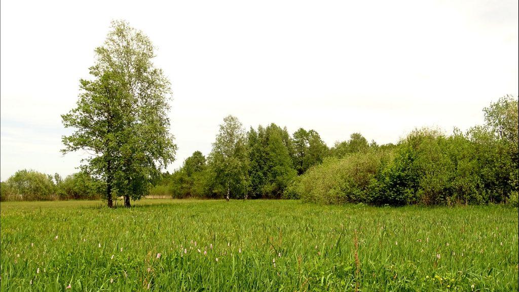 Moorwiese mit einem Baum und Sträuchern