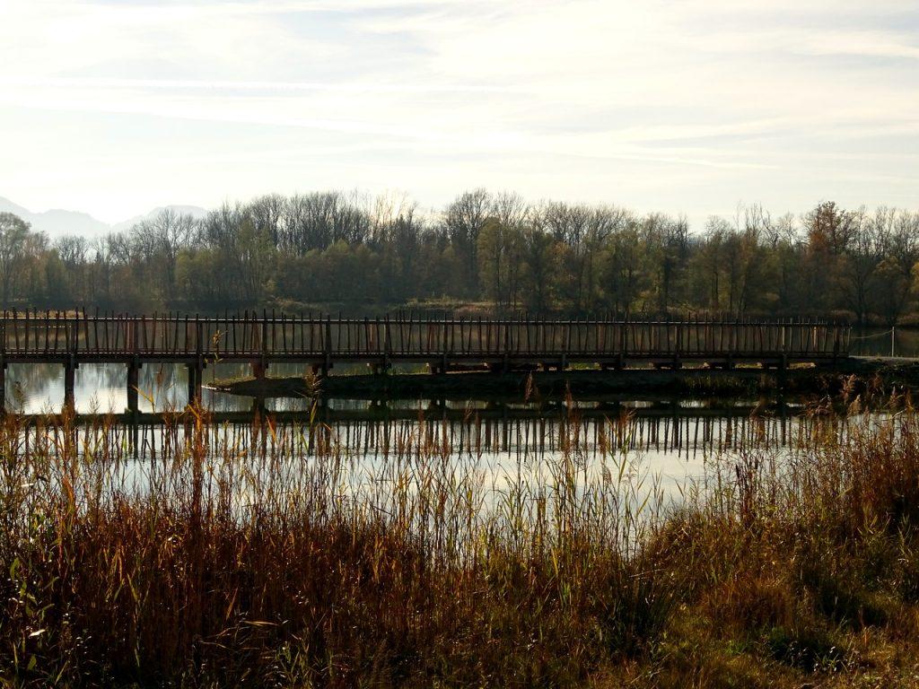 Blick auf den Holzsteg mit Auwald im Hintergrund