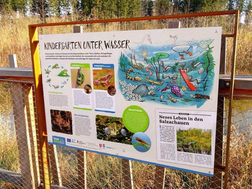"""Schautafel """"Kindergarten unter Wasser"""" am Auwaldsee-Rundweg mit detaillierten lustigen Illustrationen"""