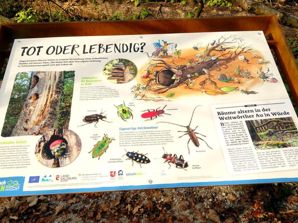 """Schautafel """"Tot oder lebendig?"""" am Auwaldsee-Rundweg mit detaillierten lustigen Illustrationen"""