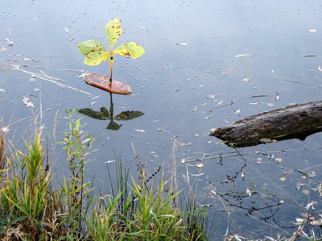 Selbstgebasteltes kleines Boot mit einem Kastanienblatt als Segel auf dem Auwaldsee