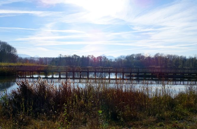 Panoramblick von Holzsteg über den Auwaldsee