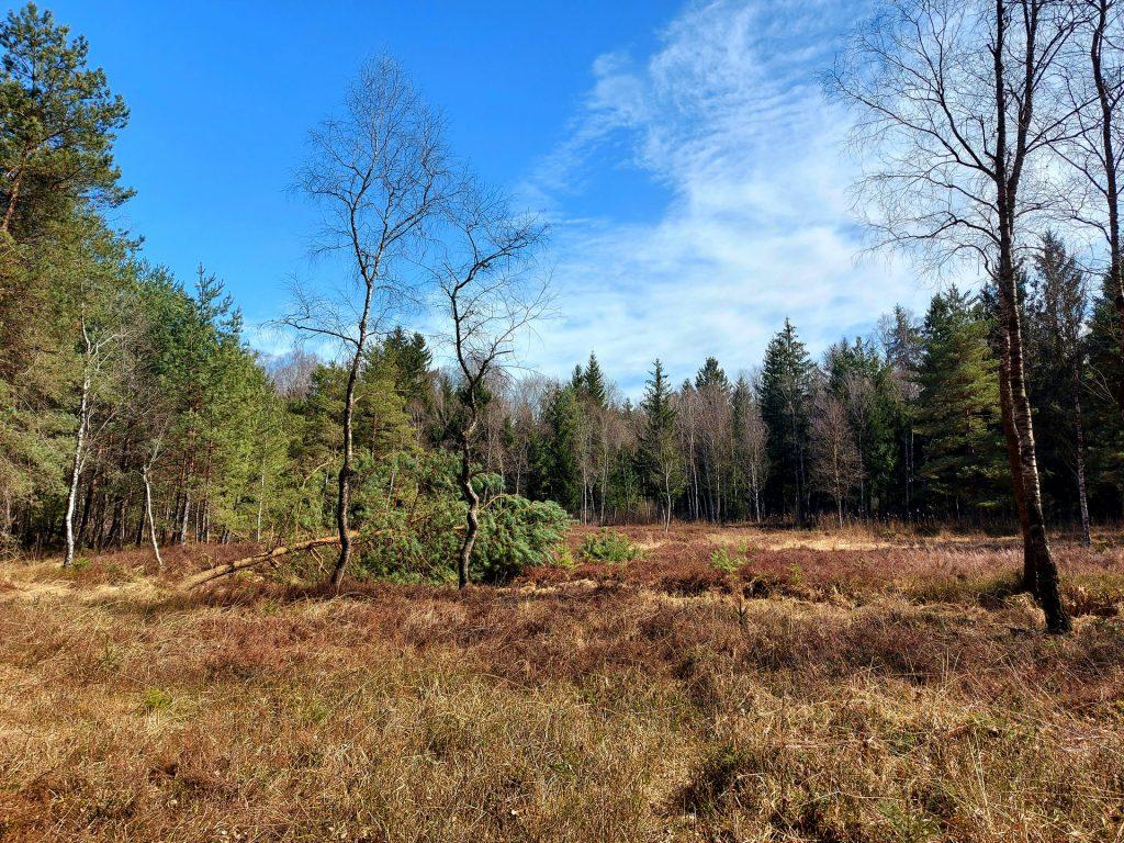 Moorheide mit Wald im Hintergrund
