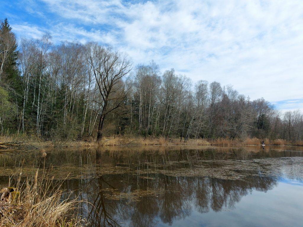 Ufer des Bürmooser Sees